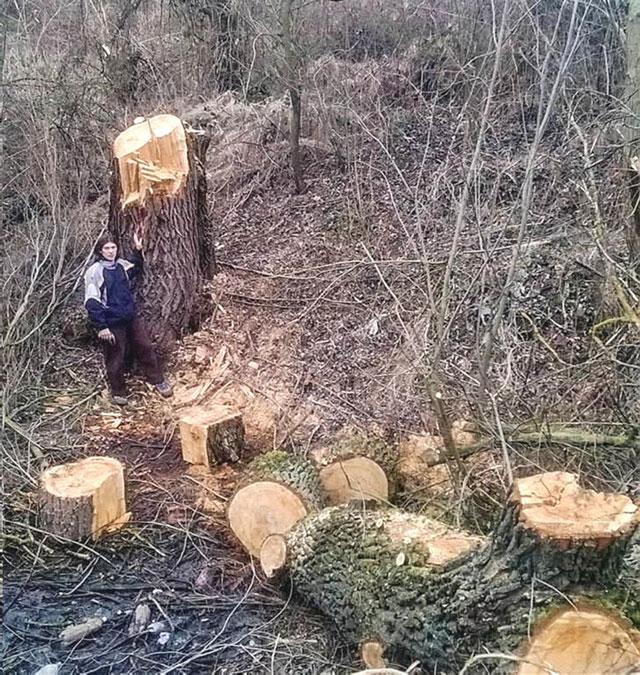 arbori taiati parc national Nera