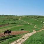 Agricultură tradiţională la Gârnic