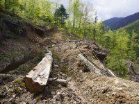 Defrisari parc national Domogled Valea Cernei